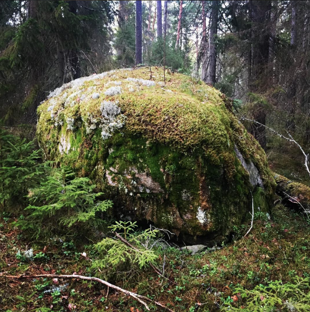 A boulder with little trees at the top in Södermanland. [Photo: Olle Bergman, @generalblom]